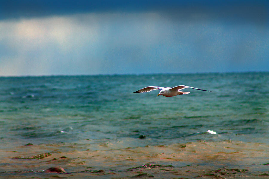 Seagull Photograph - The Flight by Rhonda Humphreys
