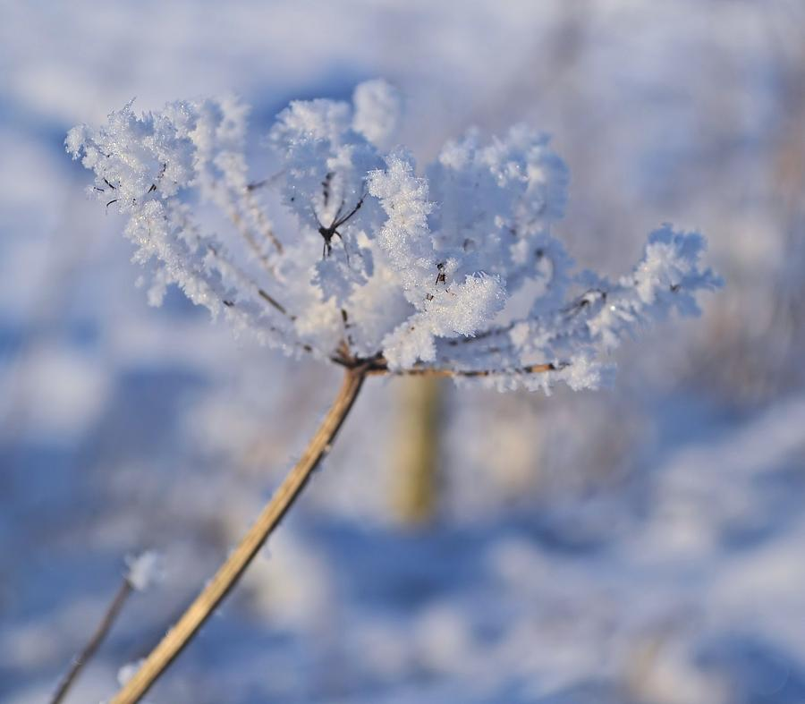 Snow Photograph - The Flower Crystal by Dave Woodbridge