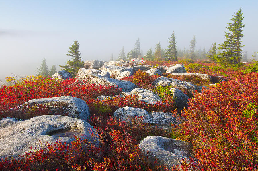 Dolly Sods Photograph - The Fog Clears At Dolly Sods by Bill Swindaman