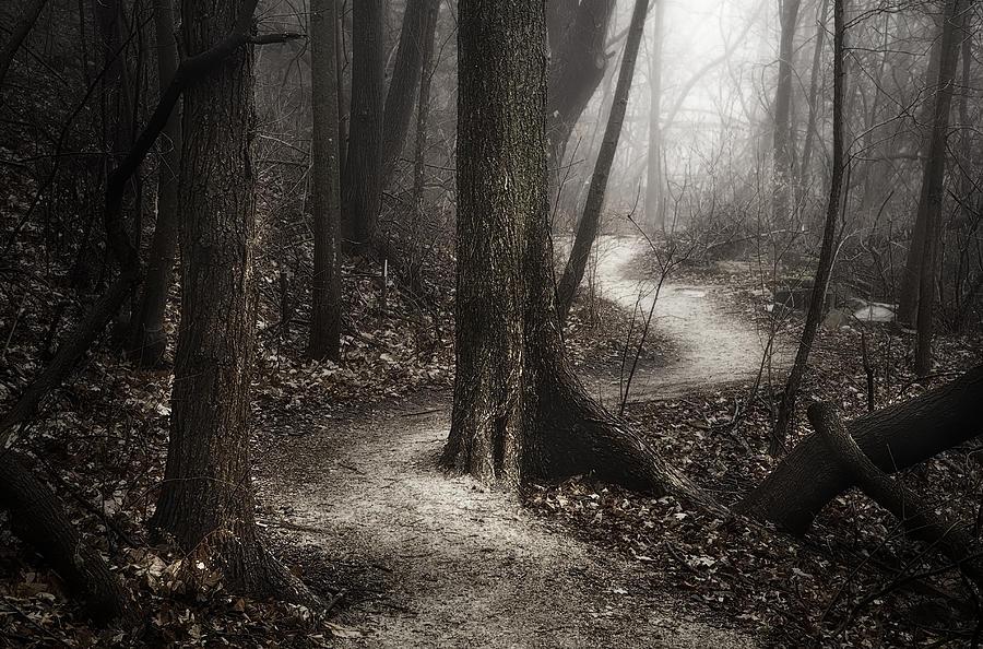 The Foggy Path Photograph