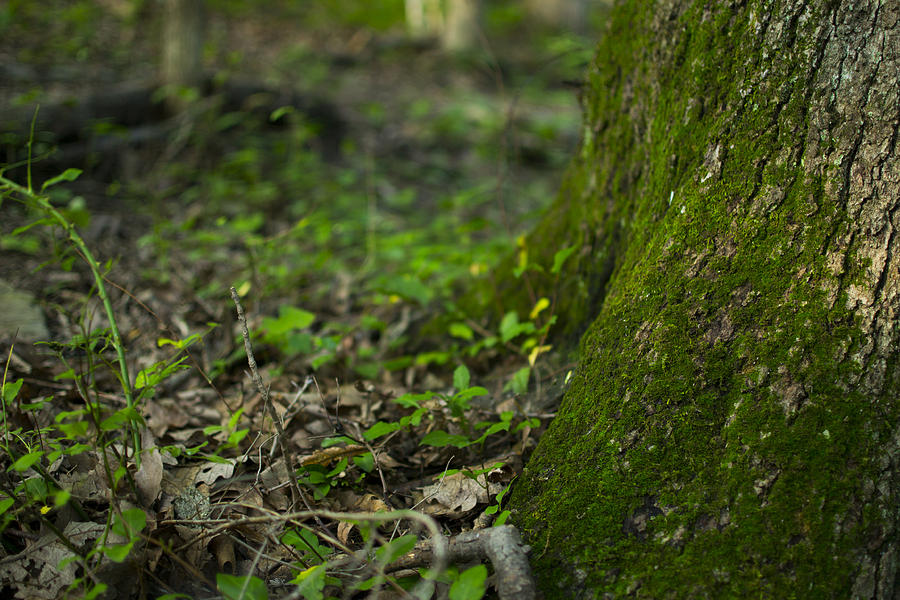 Tree Photograph - The Foot Of A Tree by Michael Williams