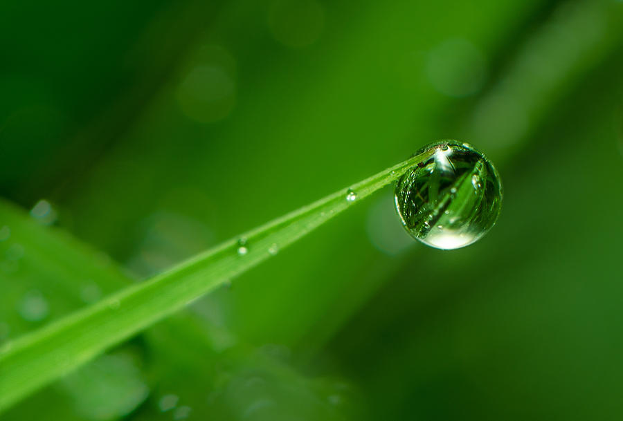 Macro Photograph - The Force Of Nature by Tin Lung Chao