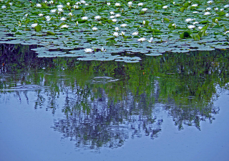 Reflection Photograph - The Forest Beneath The Lilypads by Jean Hall