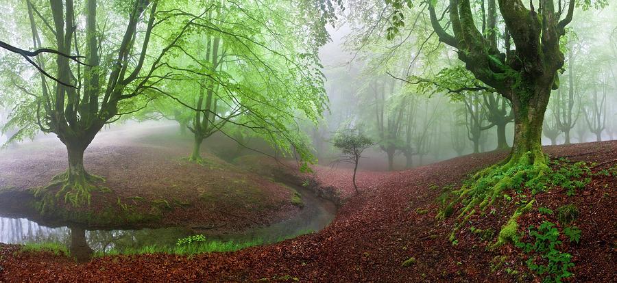 Bosque Photograph - The Forest Maravillador IIi by Juan Pixelecta