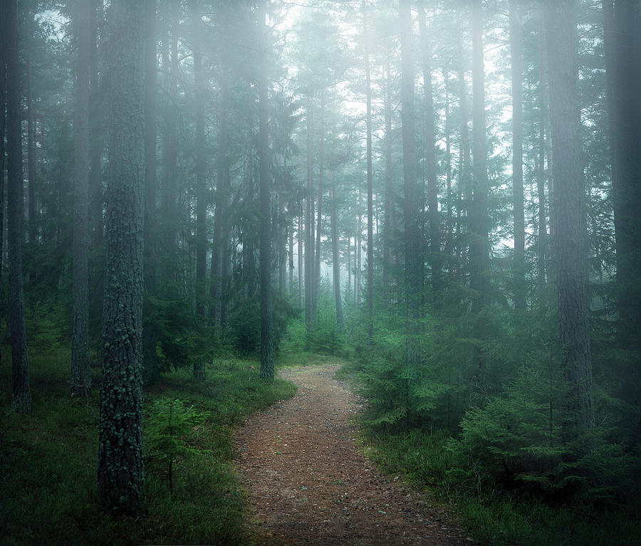 Forest Photograph - The Forest Of Secrets by Christian Lindsten
