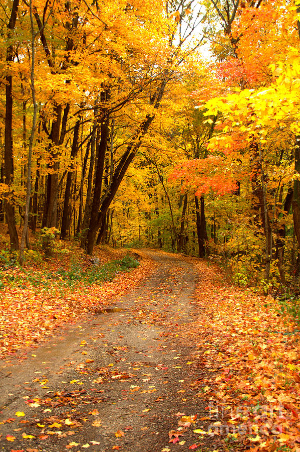 Roads Photograph - The Forest Road by Jim McCain