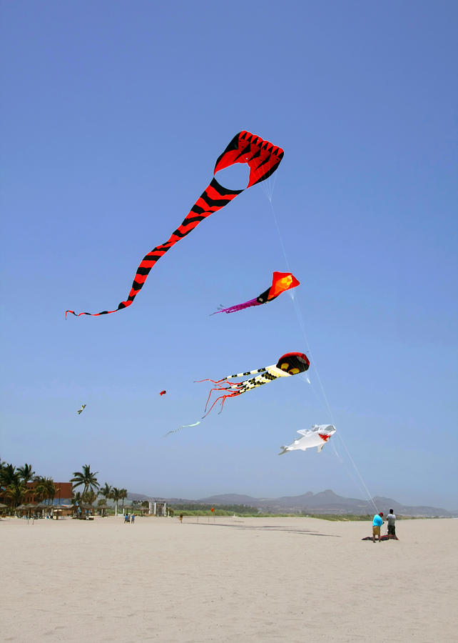 The forgotten joy of soaring kites by Christine Till