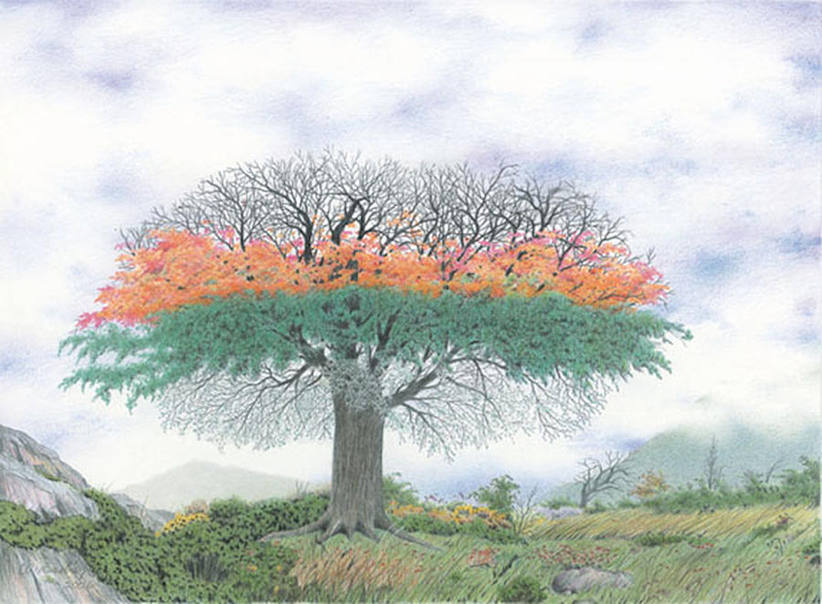 Tree Drawing - The Four Seasons Tree by Wilfrid Barbier