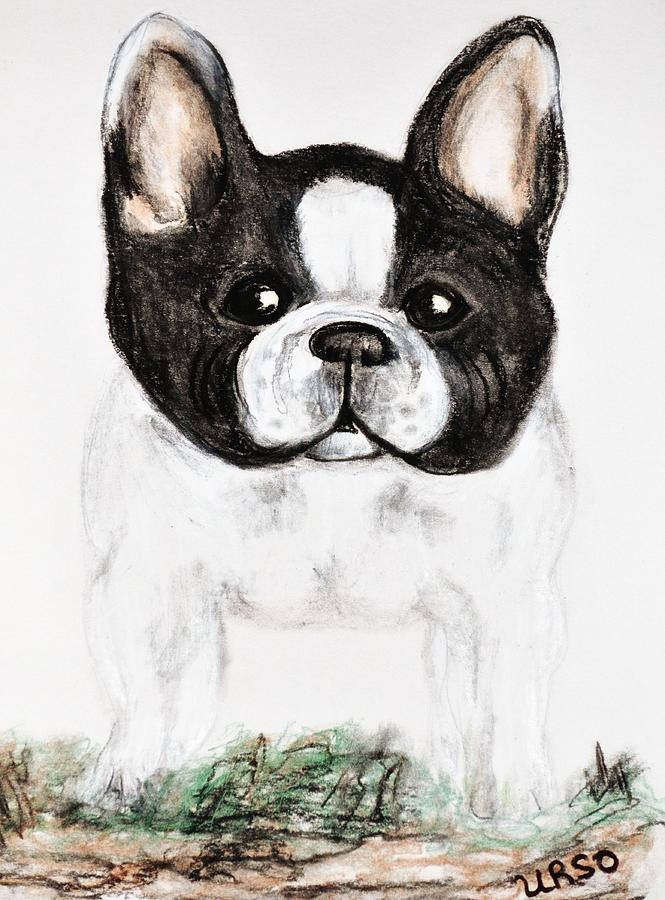 Boston Terrier Drawing - The Frenchton by Maria Urso