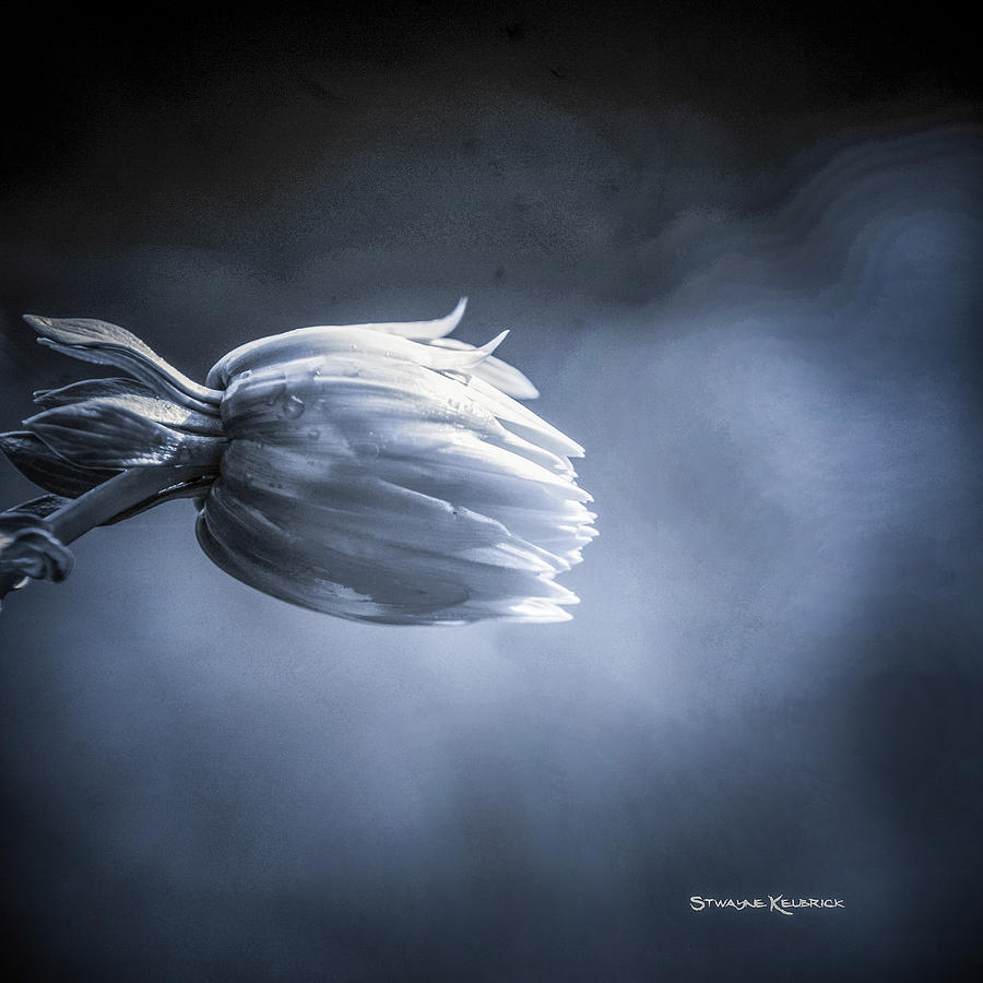 Coronavirus Photograph - The frozen ball by Stwayne Keubrick