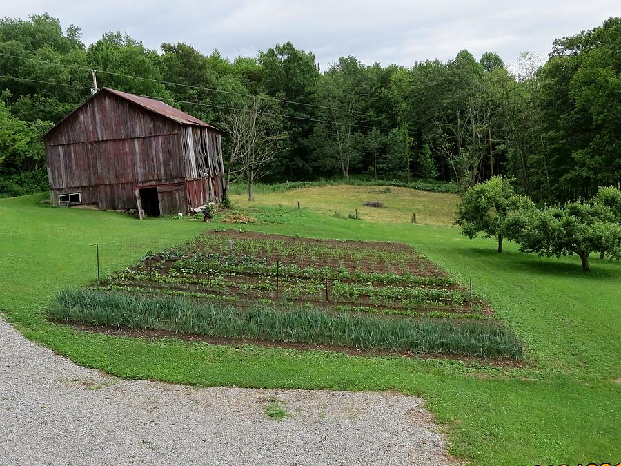 Old Barn Photograph - The Garden 2013 by Diane Mitchell