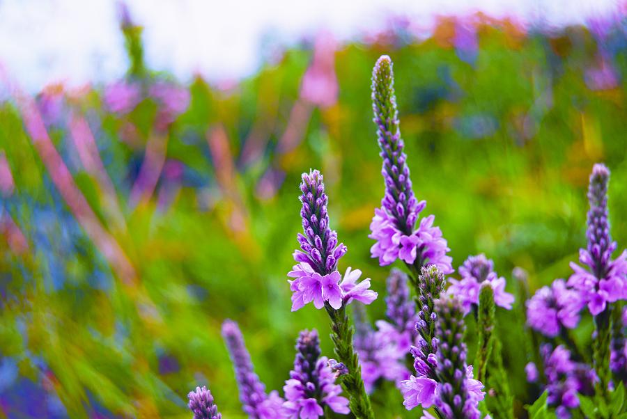 Wisconsin Photograph - The Garden Palette by Christi Kraft