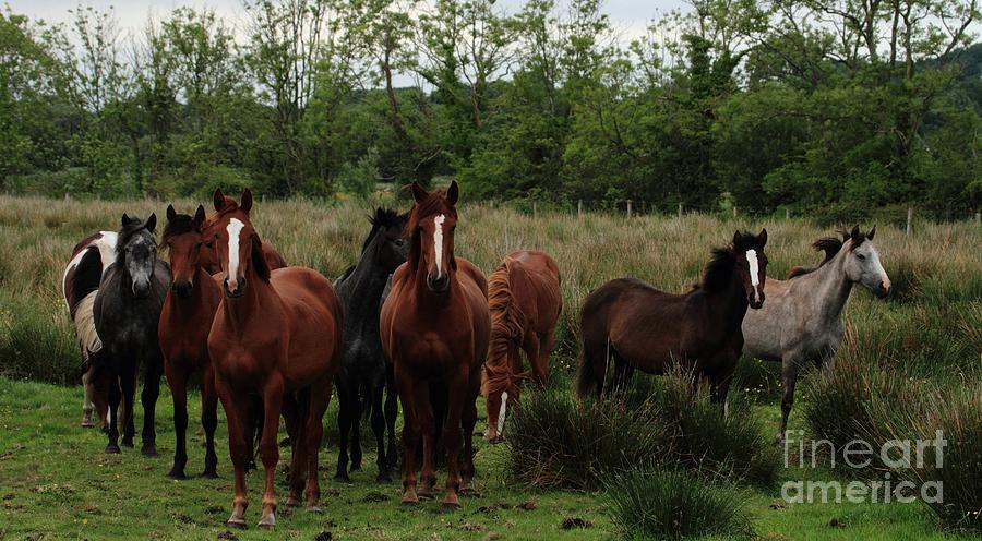 Horses Portumna Galway Ireland Pskeltonphoto.com Photograph - The Gathering by Peter Skelton