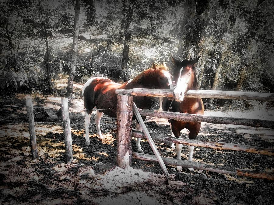Horse Photograph - The Gathering by Shiela Kowing