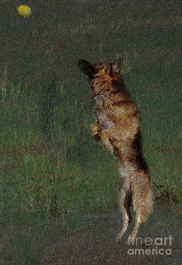 Canine Photograph - The German Shepherd Great Dog by Manjot Singh Sachdeva