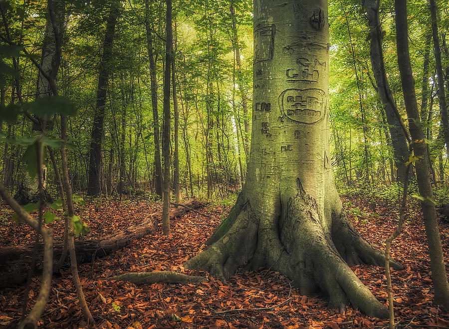 Tree Photograph - The Giving Tree by Scott Norris