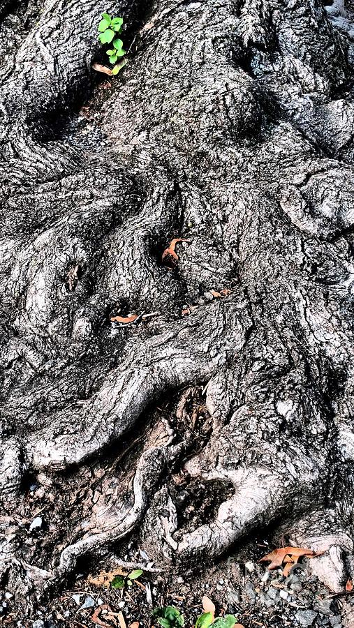 Nature Photograph - The Gnarled Old Tree by Miriam Danar