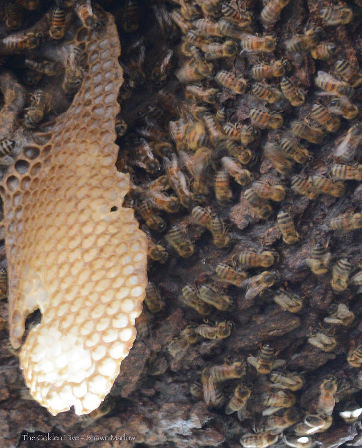 The Hive Photograph - The Golden Hive  by Shawn Marlow