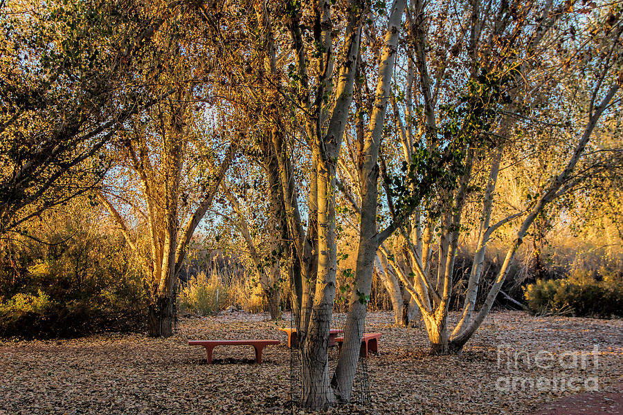Golden Photograph - The Golden Hour by Tammy Espino