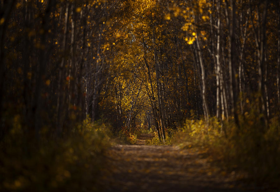 Yellow Photograph - The Golden Road by Stuart Deacon