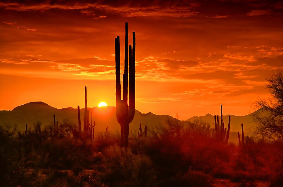 Sunset Photograph - The Golden Southwest Skies  by Saija  Lehtonen