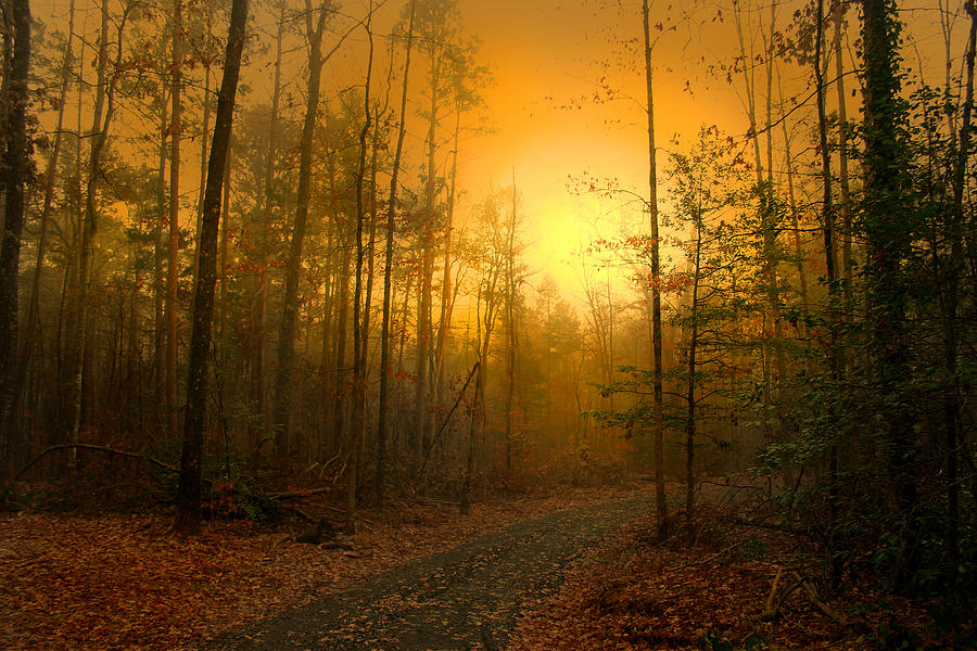 Luminism Photograph - The Golden Touch Of Autumn by Nina Fosdick