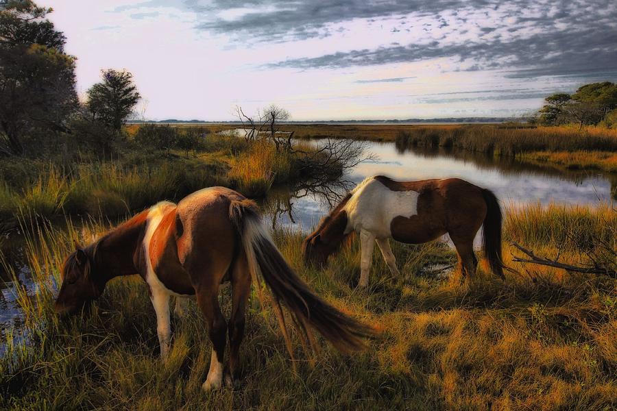 Horses Photograph - The Good Life by Robert McCubbin
