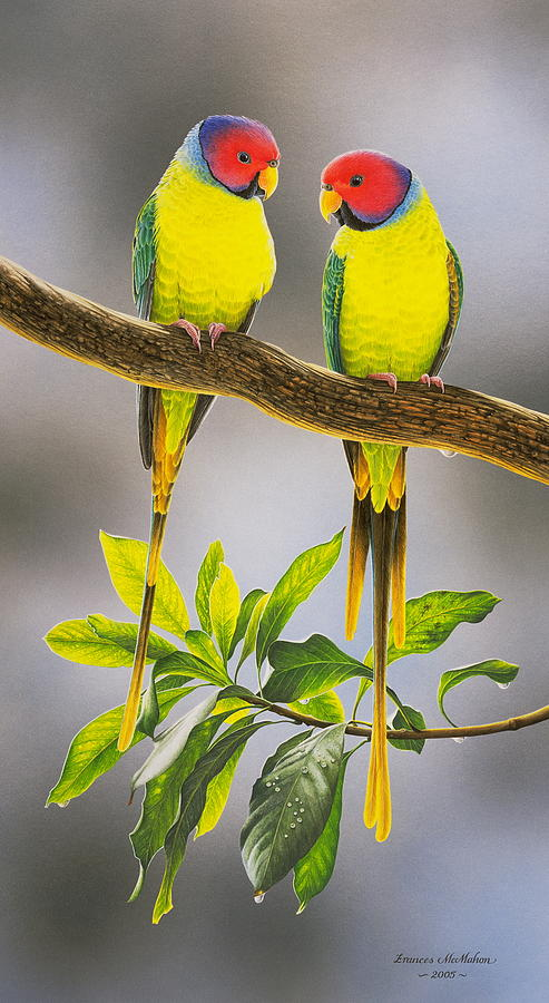 the-gorgeous-guys-plum-headed-parakeets-frances-mcmahon Painting Mobile Home Wood on landscape mobile home, travel mobile home, metal mobile home, paint mobile home, insulation mobile home, design mobile home, animation mobile home, decorating mobile home, reading mobile home, home mobile home, wood mobile home, england mobile home, solar mobile home, windows mobile home, graffiti mobile home, repair mobile home, craft mobile home, gutters mobile home, glass mobile home, building mobile home,
