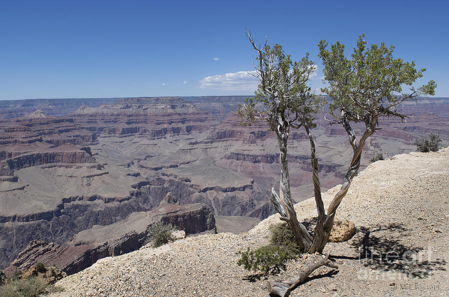 The Grand Canyon Photograph