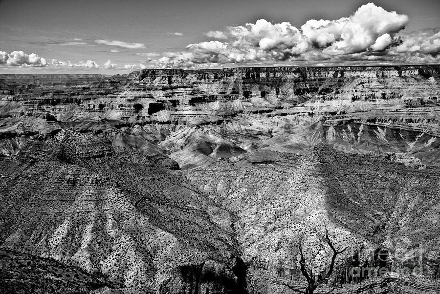 Canyon Photograph - The Grand Canyon by Bob and Nadine Johnston