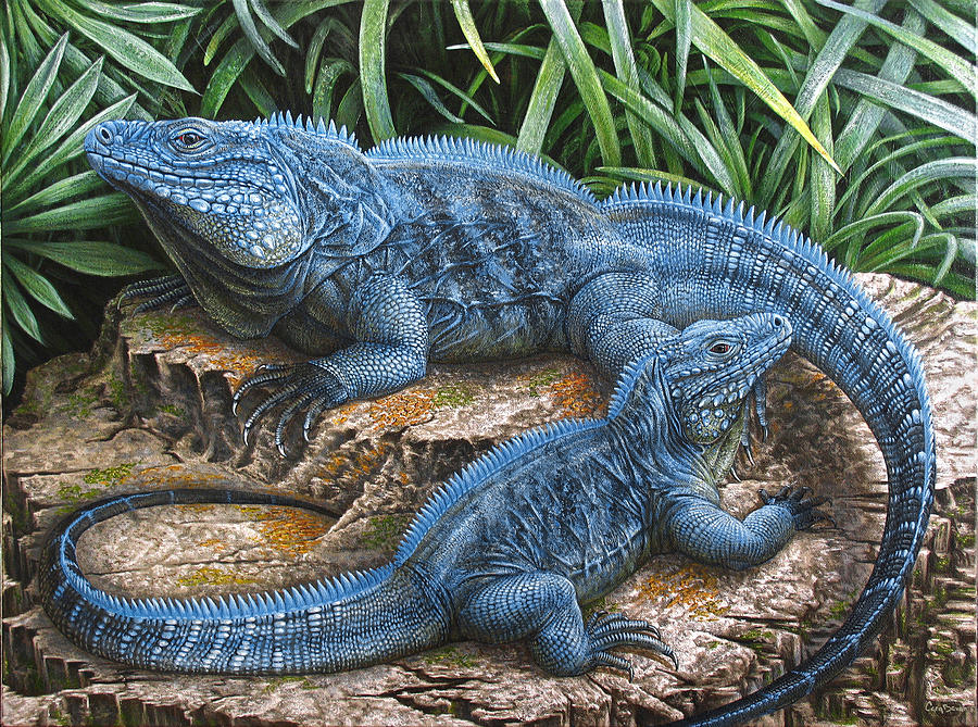 The Grand Cayman Blue Iguana Painting By Cara Bevan