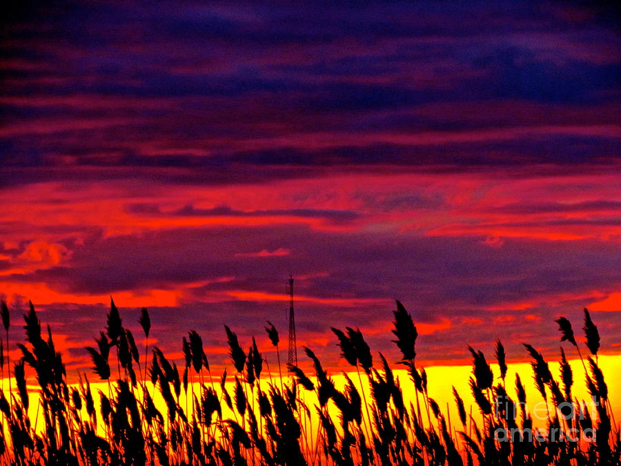 Ocean Photograph - The Grasses Reach  by Qs House of Art ArtandFinePhotography