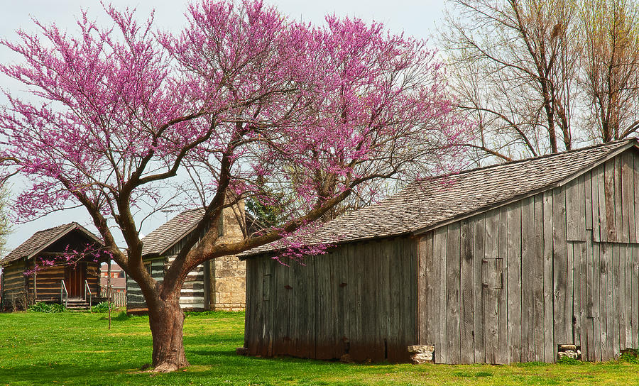 Landscape Photograph - The Gray Campbell Farmstead by Lena Wilhite