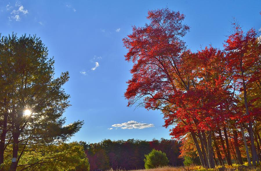 Fall Photograph - The Great Outdoors by Thomas  MacPherson Jr