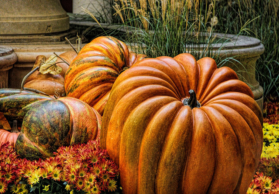 Pumpkin Photograph - The Great Pumpkin by Tammy Espino