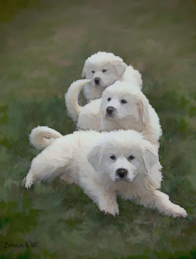 Dogs Photograph - The Great Pyranise Pups  by Bonnie Willis