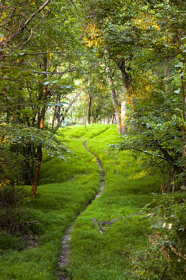 Green Photograph - The Green Path by Cara Moulds