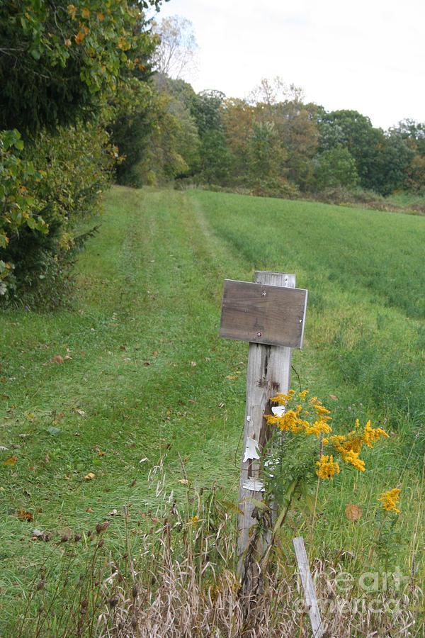 The Greener Path Photograph