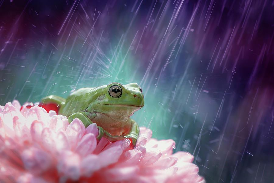 Frog Photograph - The Happy Rain by Ahmad Baihaki