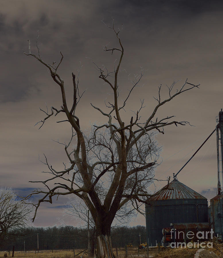 Spooky Photograph - The Haunting Tree by Alys Caviness-Gober