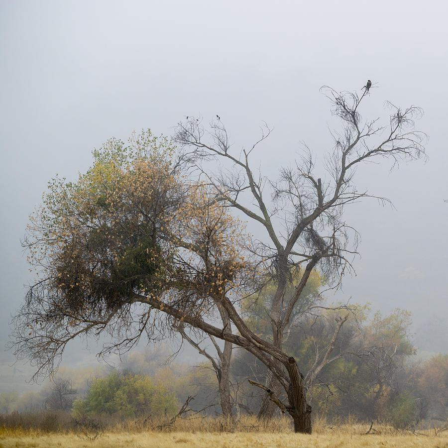 Landscape Photograph - The Hawk by Darin McQuoid