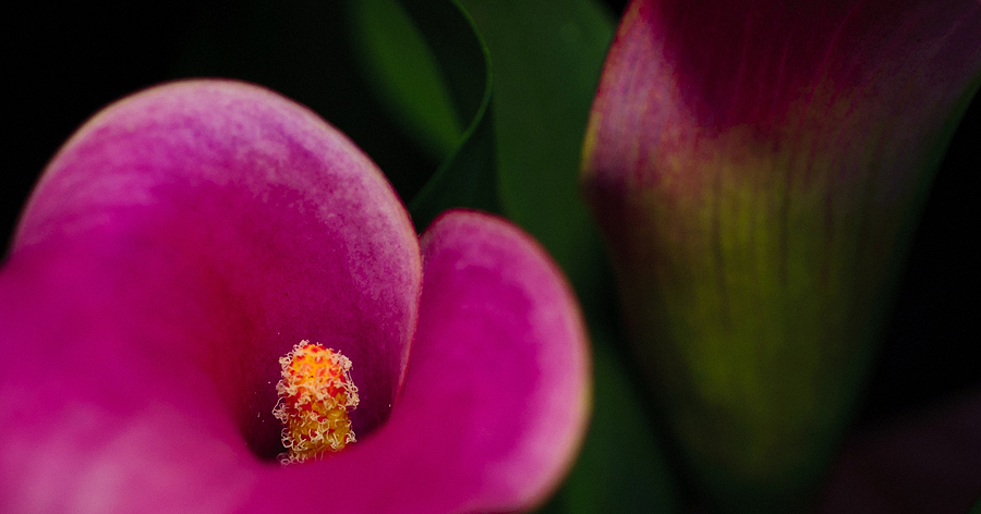 Beautiful Photograph - The Heart Of The Lily by Christi Kraft