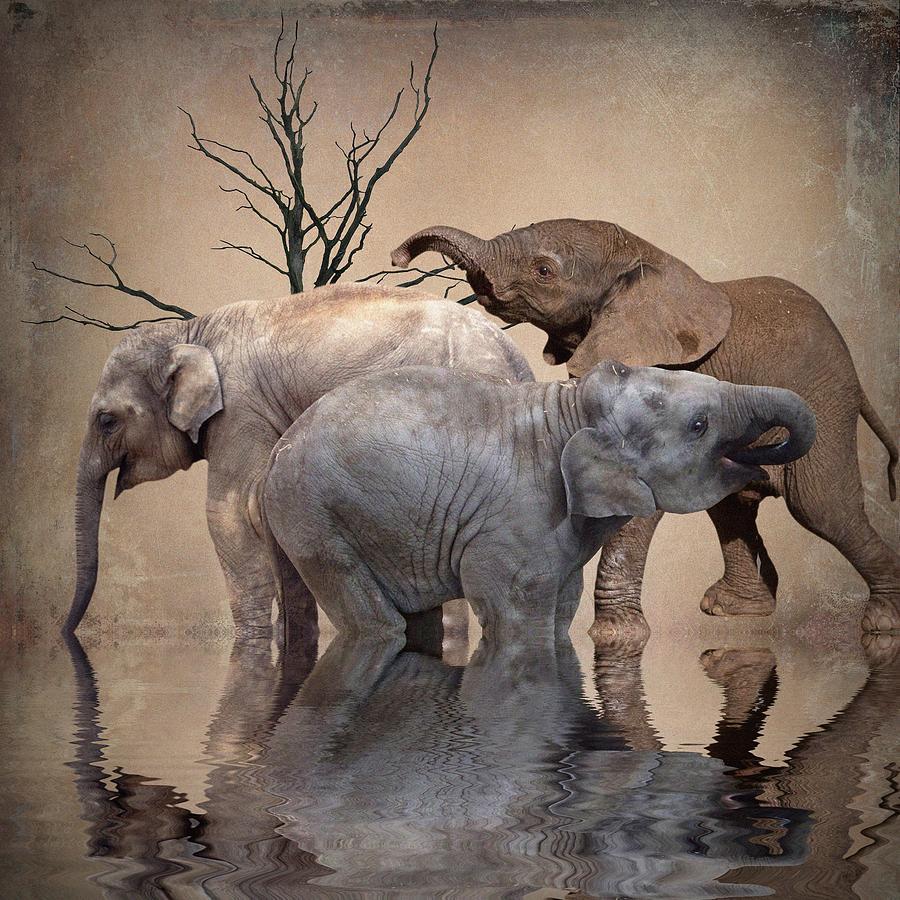 Elephants Photograph - The Herd by Sharon Lisa Clarke