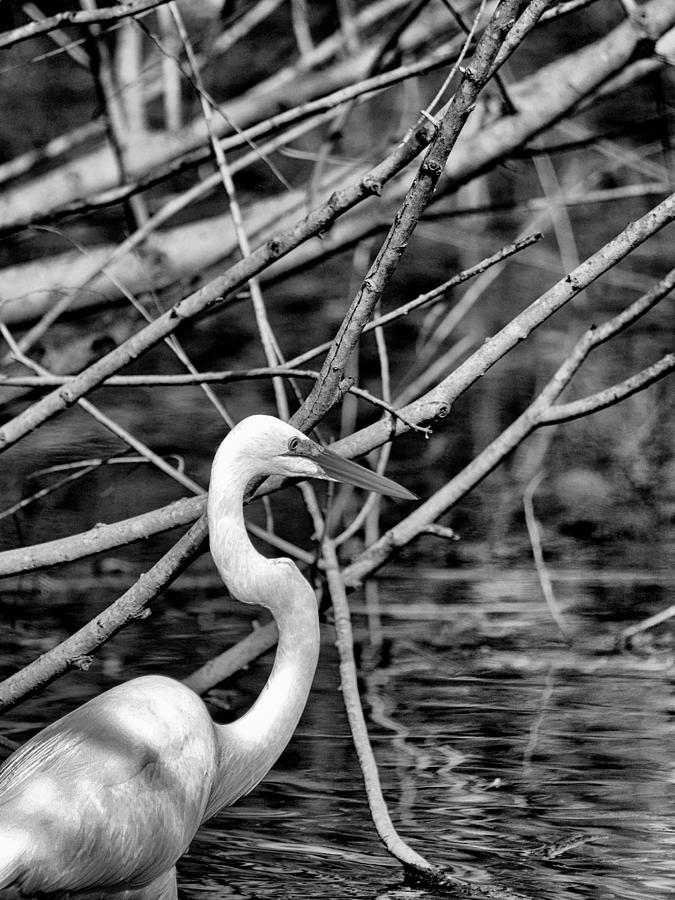 Joshua House Photography Photograph - The Hidden Egret  by Joshua House