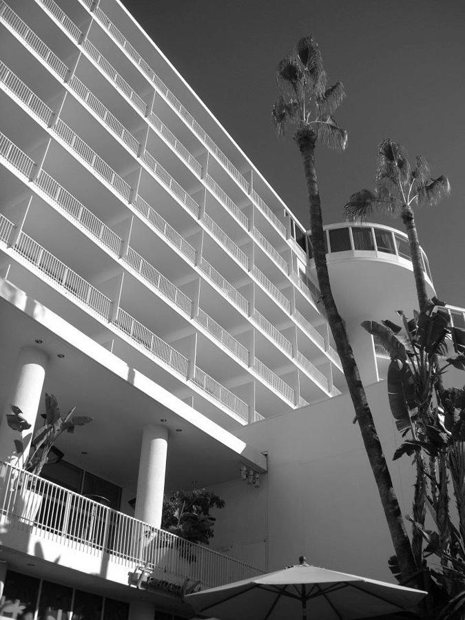 Palm Trees Photograph - The Hilton by Brynn Ditsche