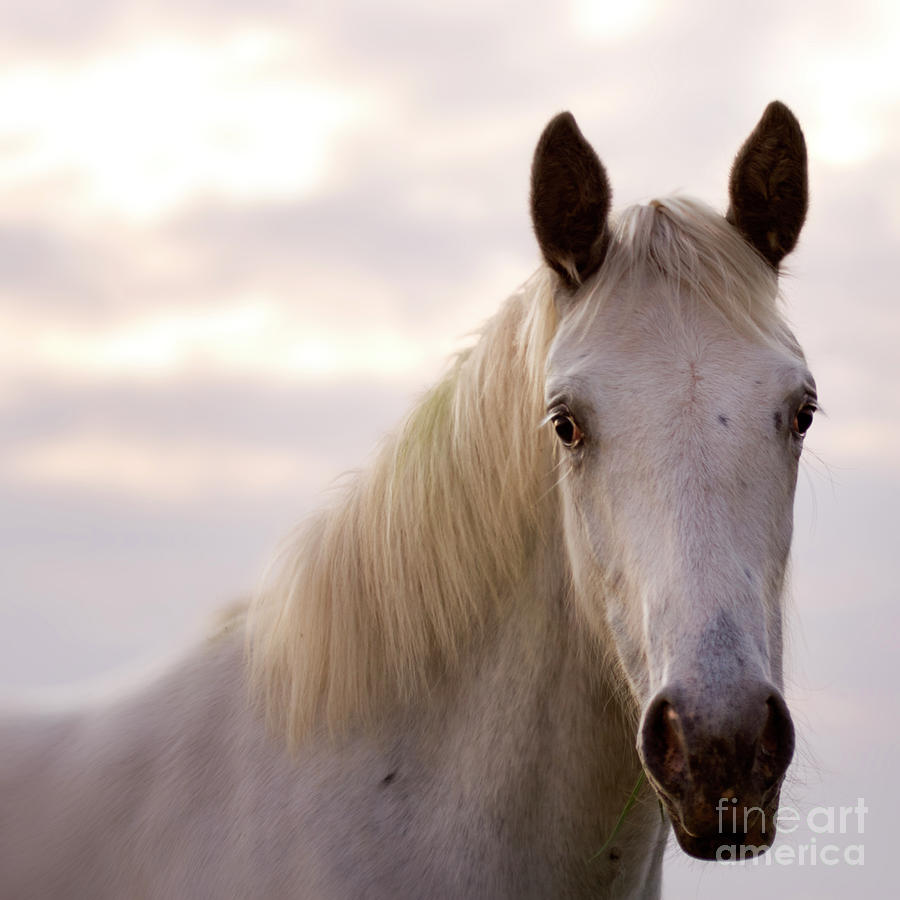 Horse Photograph - The Horse In The Setting Sun by Angel Ciesniarska