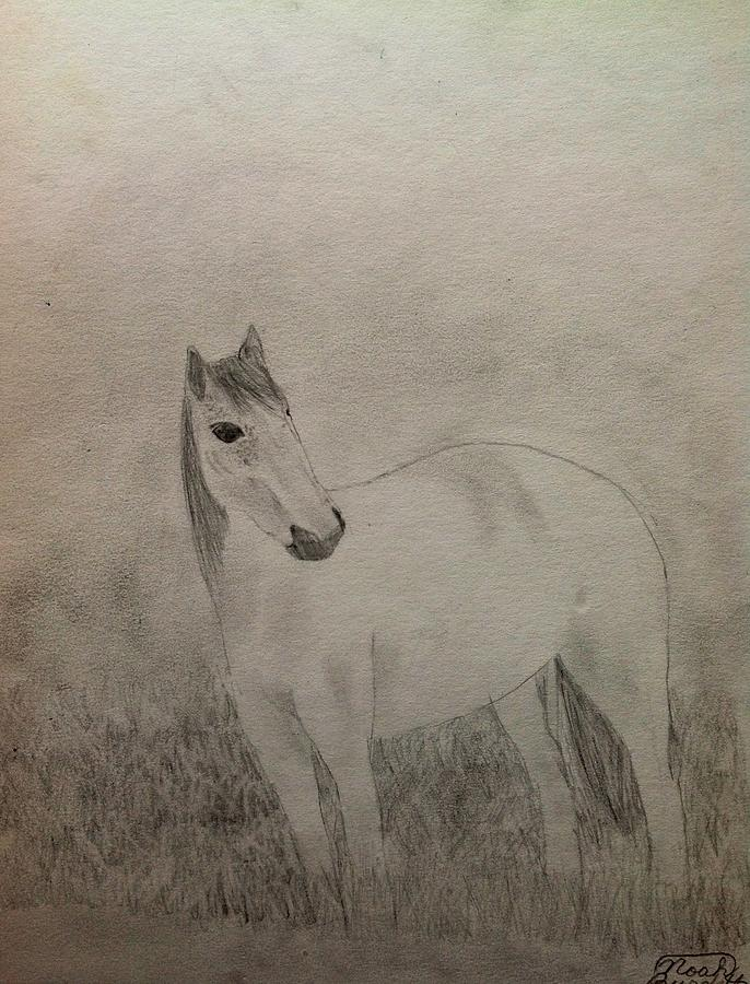 Horse Drawing - The Horse by Noah Burdett