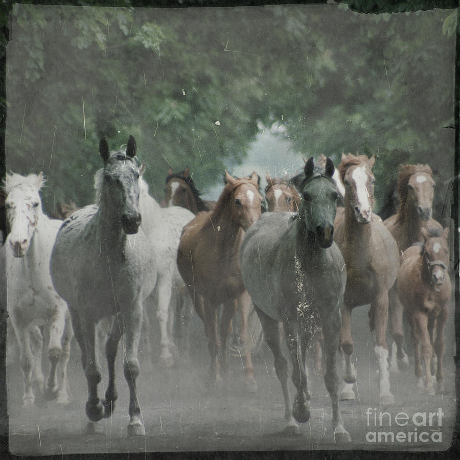 Arabian Photograph - The Horsechestnut Tree Avenue by Angel  Tarantella