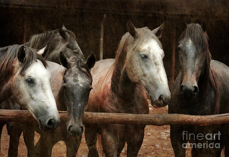 Horse Photograph - The Horses by Angel  Tarantella