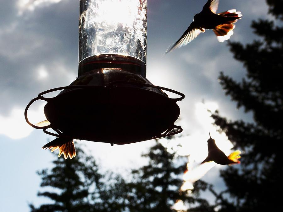 Hummingbirds Photograph - The Hummers Dance by Cherie Haines